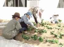 010601PTA環境園芸委員会3